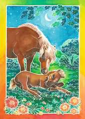 Wilde Pferde - Bild 2 - Klicken zum Vergößern