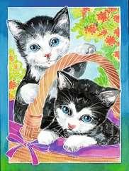 Kätzchen - Bild 3 - Klicken zum Vergößern