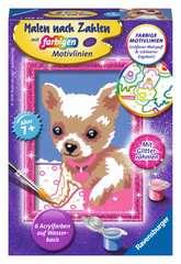 Chihuahua - Bild 1 - Klicken zum Vergößern