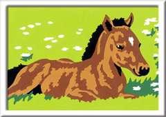 Kleines Fohlen - Bild 2 - Klicken zum Vergößern
