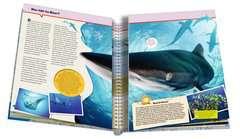 Ozeane - Bild 5 - Klicken zum Vergößern