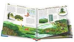 Alles über Bäume - Bild 4 - Klicken zum Vergößern