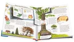 Alles über Bäume - Bild 5 - Klicken zum Vergößern