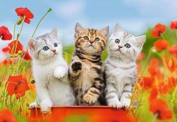 Katzen auf Entdeckungsreise Puslespil;Puslespil for børn - Billede 2 - Ravensburger