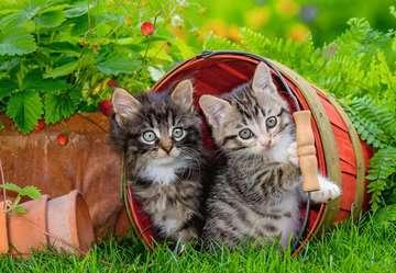 Katzen auf Entdeckungsreise Puslespil;Puslespil for børn - Billede 3 - Ravensburger