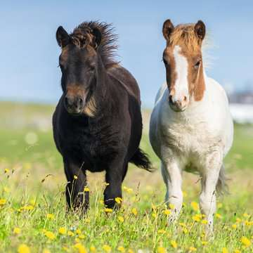 Loving Horses 3x49p Puslespil;Puslespil for børn - Billede 2 - Ravensburger