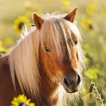 Loving Horses 3x49p Puslespil;Puslespil for børn - Billede 3 - Ravensburger