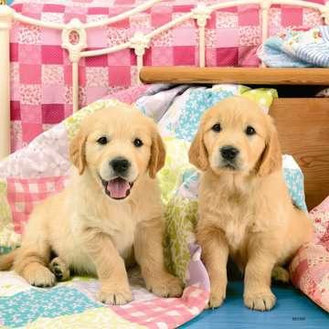 Cute Puppy Dogs Puslespil;Puslespil for børn - Billede 3 - Ravensburger