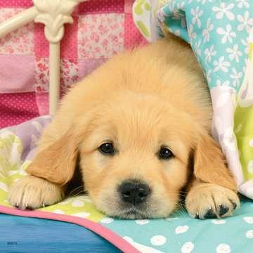Cute Puppy Dogs Puslespil;Puslespil for børn - Billede 4 - Ravensburger