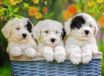 Cuddly Puppies Puslespil;Puslespil for børn - Billede 2 - Ravensburger