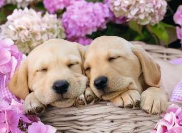 Cute Friends XXL300 Puzzles;Children s Puzzles - image 2 - Ravensburger