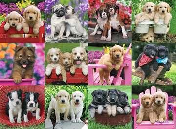 Puppy Pals 500pc Puslespil;Puslespil for voksne - Billede 2 - Ravensburger