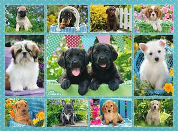 Cute Puppies, 500pc Puzzles;Adult Puzzles - image 2 - Ravensburger