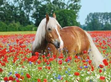 Paard tussen de klaprozen Puzzels;Puzzels voor volwassenen - image 2 - Ravensburger