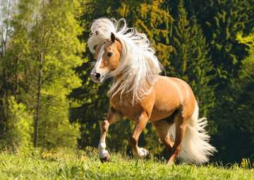 15009 Erwachsenenpuzzle Pferdeglück von Ravensburger 2