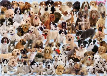 Dog s Galore! Jigsaw Puzzles;Adult Puzzles - image 3 - Ravensburger