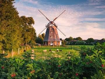 16223 Erwachsenenpuzzle Windmühle an der Ostsee von Ravensburger 2