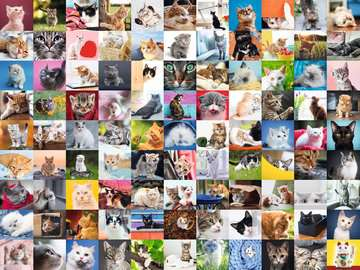 16235 Erwachsenenpuzzle 99 Katzen von Ravensburger 2