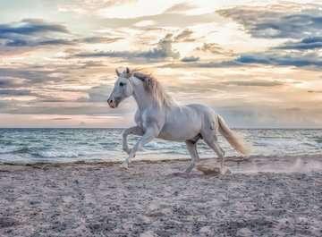 16586 Erwachsenenpuzzle Pferd am Strand von Ravensburger 2