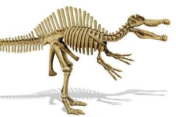 Triops et Dinosaures Jeux scientifiques;Préhistoire-Dinosaures - Image 16 - Ravensburger