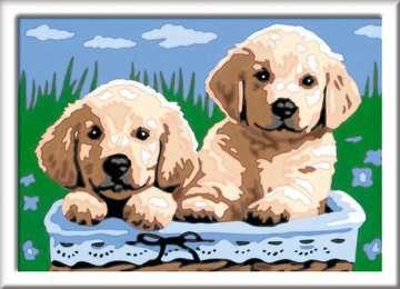 27839 Malen nach Zahlen Süße Hundewelpen von Ravensburger 2