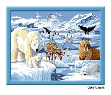 Dieren op Antartica Hobby;Schilderen op nummer - image 3 - Ravensburger