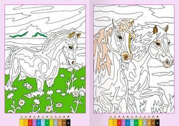41711 Malbücher und Bastelbücher Malen nach Zahlen: Pferde von Ravensburger 4