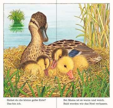 43548 Babybücher und Pappbilderbücher Ich bin die kleine Ente von Ravensburger 4