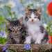 Tiger Kittens Jigsaw Puzzles;Children s Puzzles - image 3 - Ravensburger