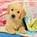 Cute Puppy Dogs Puslespil;Puslespil for børn - Billede 2 - Ravensburger