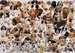 Dogs Galore Puslespil;Puslespil for voksne - Billede 3 - Ravensburger
