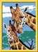Giraffen Hobby;Schilderen op nummer - image 2 - Ravensburger