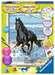 Paard in de branding Hobby;Schilderen op nummer - image 1 - Ravensburger