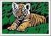 Süßer Tiger Malen und Basteln;Malen nach Zahlen - Bild 2 - Ravensburger