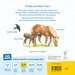 Mein allererstes Tierlexikon Kinderbücher;Babybücher und Pappbilderbücher - Bild 3 - Ravensburger